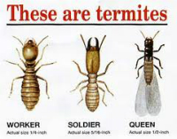 Image Result For Termite Spot Treatment