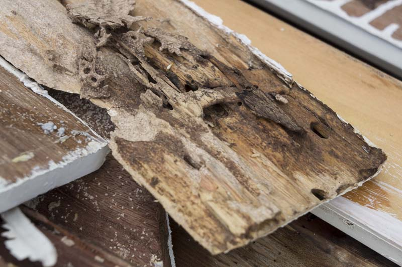 Termite Inspections And Treatment Services In Austin Texas