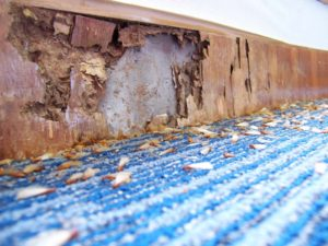 Interior termite wood damage.